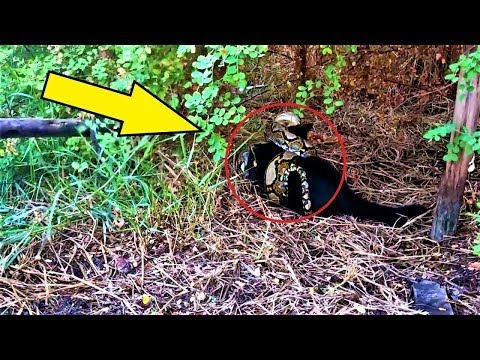 Builders saw something AWFUL in the bushes! It grabbed the cat and was getting ready to eat him!