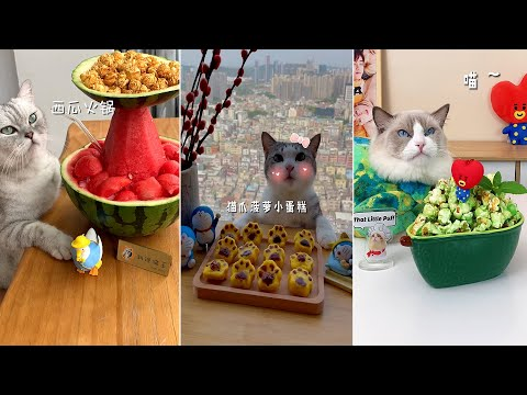 Super Cat Chef #2 | Cute and Funny Cat Videos Compilation