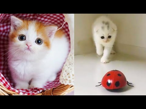 Baby Cats - Cute and Funny Cat Videos Compilation #01 Aww Cute Animals