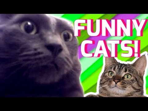 Funny Cats Compilation 2017   Best Funny Cat Videos Ever   Funny Vines