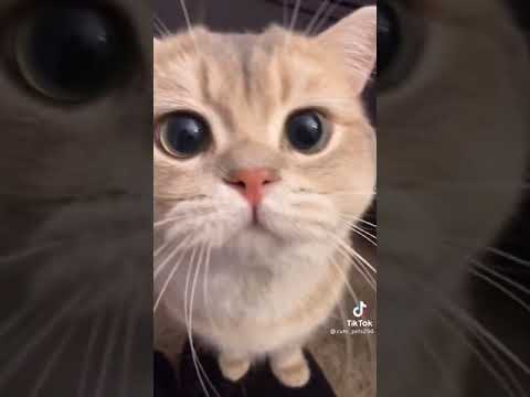 Beautiful Cats And Cute Funny Cats Videos Compilation Cats Lovely