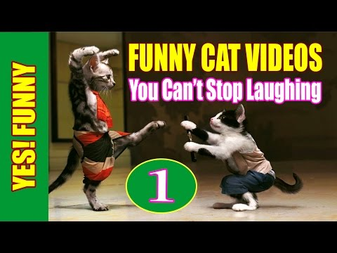 Funny Cat Videos 2016 - You Can't Stop Laughing [Part 1]