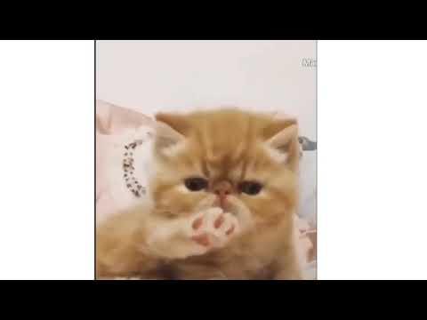 Funniest# Yavru kediler   Watch fun and funny cat videos#