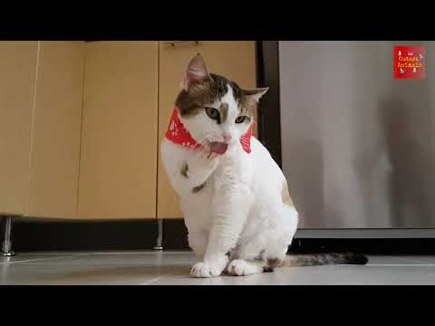 OMG So Cute  Cats ♥️ Best Funny Cat Videos 2021 #02
