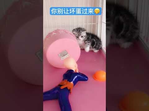 OMG So Cute Cats ♥ Best Funny Cat ❤️