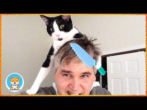 OMG So Funny Cat