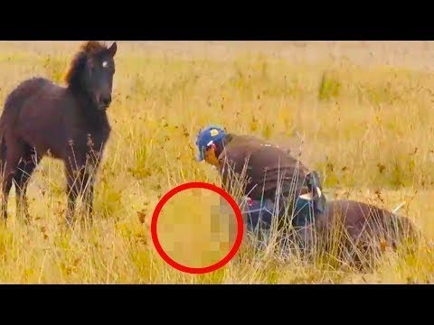 """Man rescues a wild horse and gets an incredible """"thank you"""" in a few moments"""