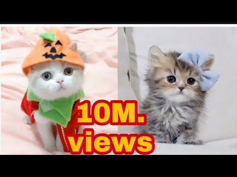 cute funny cat videos