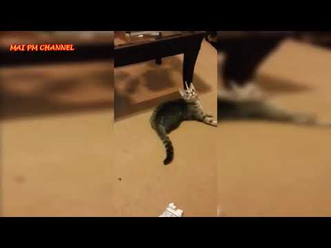 Funny Cats    Funny And Cute Cat Videos Compilation 2016  New HD