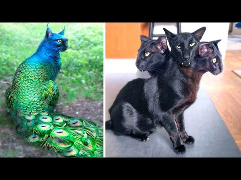 One in a Billion! The Rarest Cats in the World
