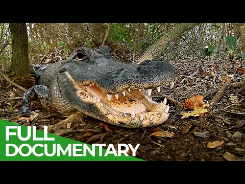 The Most Dangerous Wildlife Moments - Part 2 | Free Documentary Nature