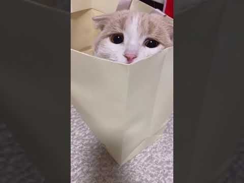 funny cat videos | cute cat videos | cute animals | funny cats 1192 #shorts
