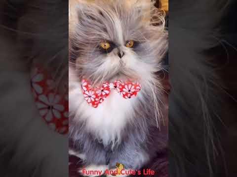 Funny cat videos  #Shorts