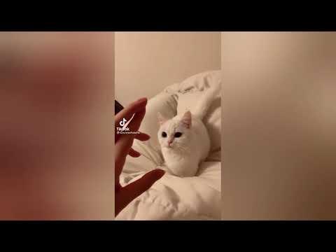 Funny CAT videos (Tiktok Compilation)
