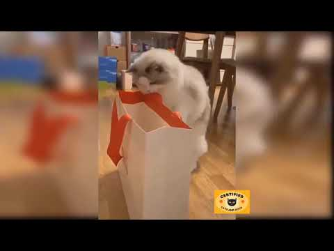 Baby Cats - Cute and Funny Cat Videos Compilation  (2021) | cats and dogs