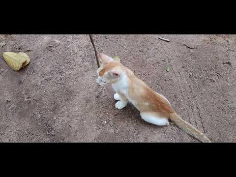 funny cat, funny cat videos, funny cats, cat videos, dancing cats , domestic cats, baby cats, cat