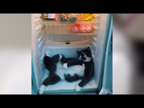 Super Funny Cats - Funny Cats Videos - Cute Kitten Cats Videos - Cat Compilation  | Just Like Cat