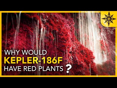 Why Would KEPLER-186F Have RED Plants?