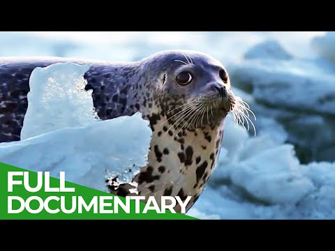Forces of Nature | Part 3 | Flowing Waters | Free Documentary Nature