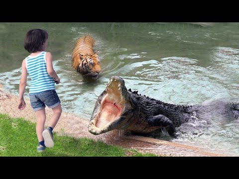 Crocodile grabbed the girl and dragged her into water, no one could imagine what would happen next