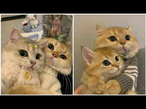 Baby Cat Videos   Kitten Videos   Cute Funny Cat Videos   Baby Cats - Cute and Funny Cat Videos