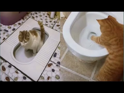 MG So Cute Cats ♥ Best Funny Cat Videos funny cats compilation 2021 #9 #CuteAN Animals