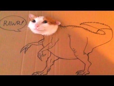 FUNNY CAT VIDEOS 2