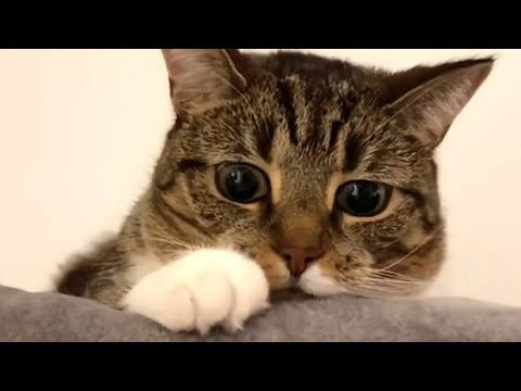 Funny and Cute Cat videos to Cheer Up your Weekend 2021!