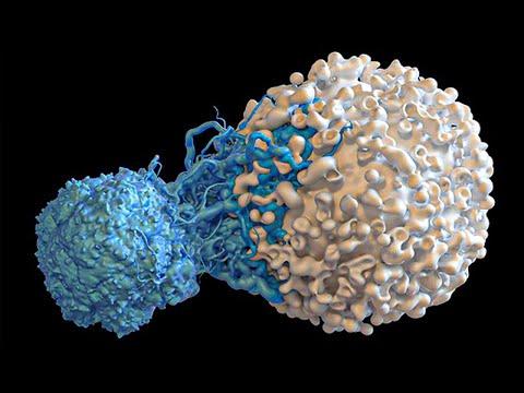 Top 15 STRANGEST Looking Cells