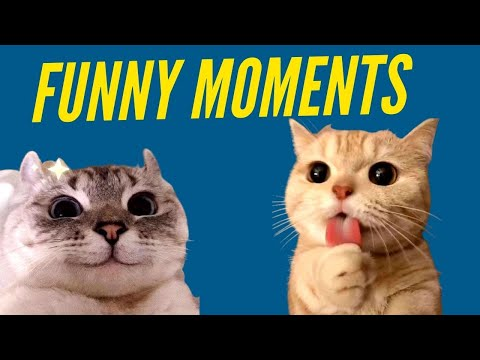 Funny Cat Moments Try Not To Laugh Cute Kittens Cat Videos