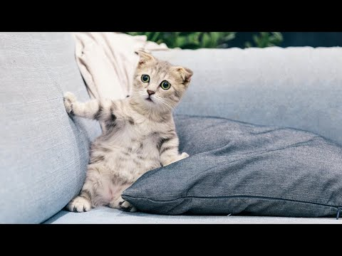 Baby Cats - Cute and Funny Cat Videos Compilation #1
