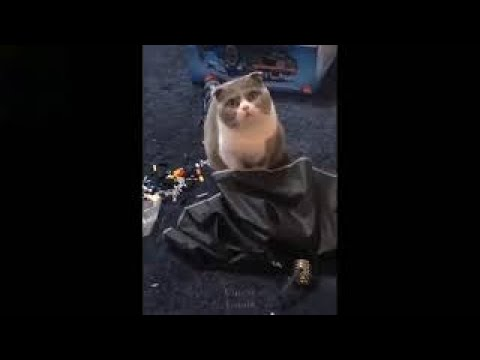 #FunnyPetVideos  #funnycat #funnycatmoments #funnycatvideos Baby Cats - Cute and Funny Cat Videos