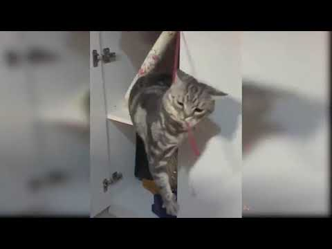 Baby Cats   Cute and Funny Cat Videos Compilation #8   Aww Animals