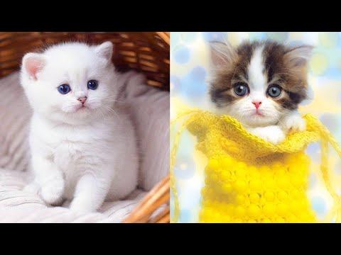 Baby Cats - Cute and Funny Cat Videos Compilation #29 | Aww Animals