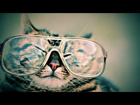 Funny Cat Moments