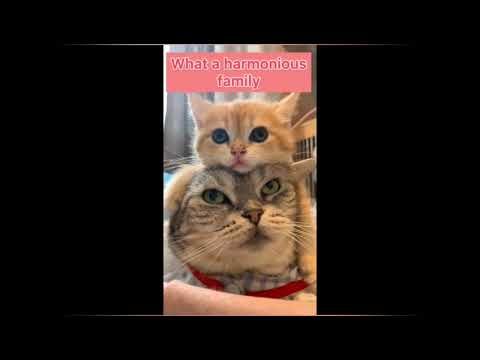 Baby Cats - Cute and Funny Cat Videos Compilation