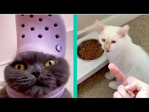 ultimate funny cat videos