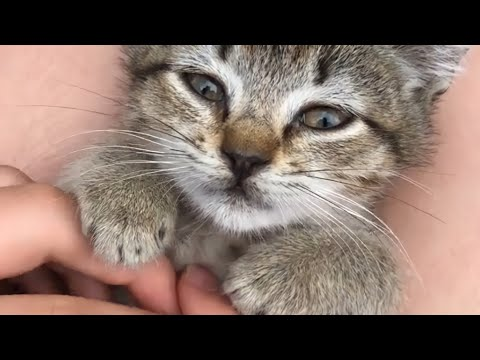 Cute and Funny Cat Videos to Make Your Sunday!