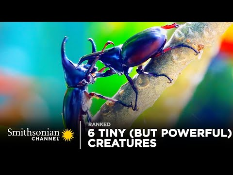 6 Tiny (But Powerful!) Creatures | Smithsonian Channel