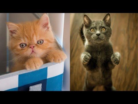 So funny cat videos
