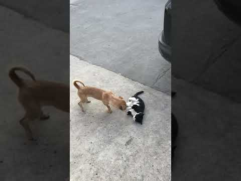 Cute kittens Baby Cats   Cute and Funny Cat Videos Compilation #shorts #animals # 153