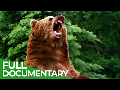 The Strongest | Wild Ones | Episode 1 | Free Documentary Nature