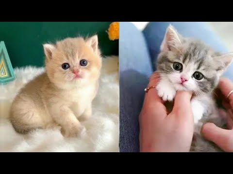 Baby Cats - Cute and Funny Cat Videos Compilation #05 | Pets awesome