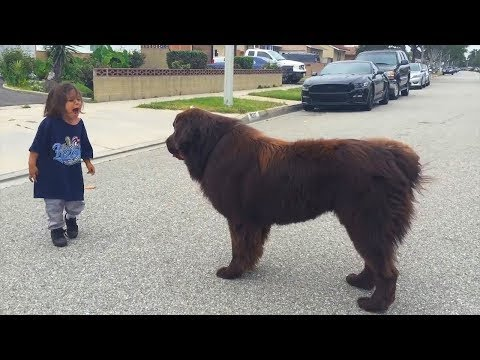 The child saw a huge dog on the street, and what he did was amazing