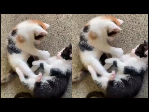 BEST CAT VIDEOS OF 2021 (CUTE AND FUNNY CATS)
