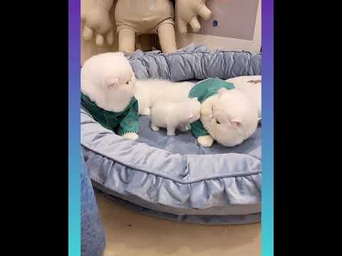 Cute and Funny Cat Videos Compilation 2021_ |04|_#shorts