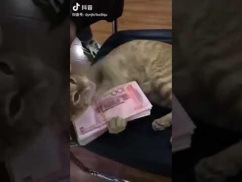 So Cute Cat Kitten